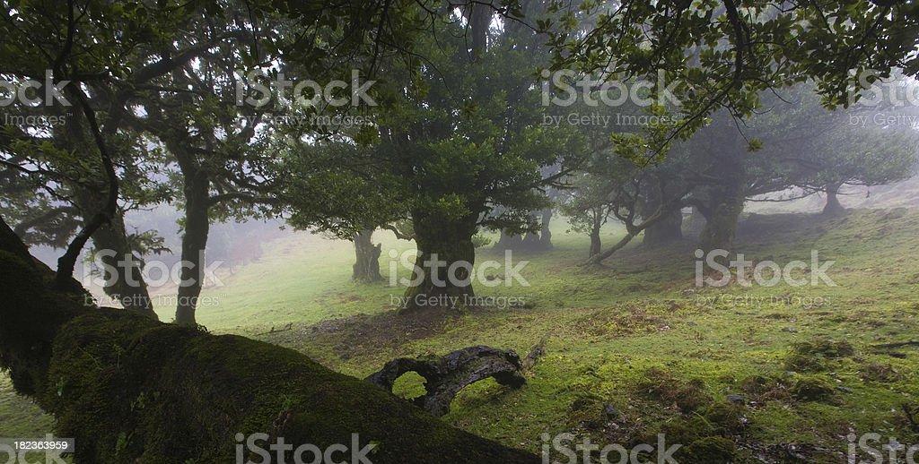 laurel tree royalty-free stock photo