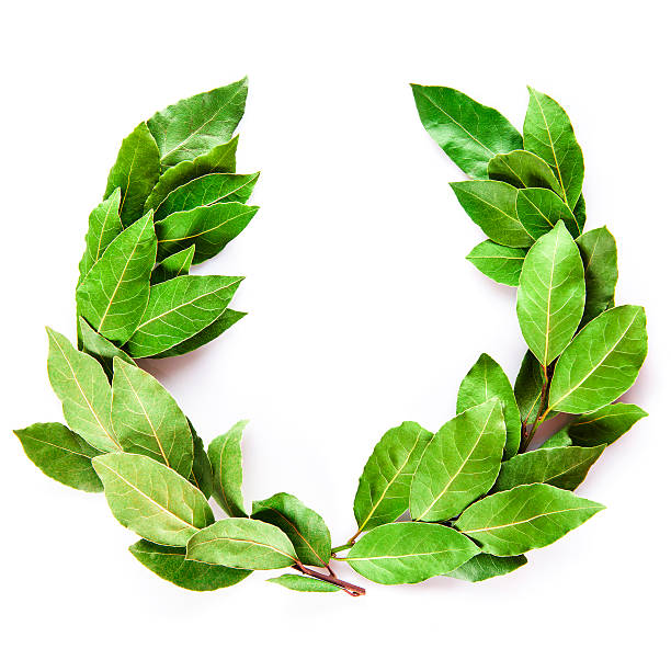 Laurel wreath isolated on white background - foto de acervo