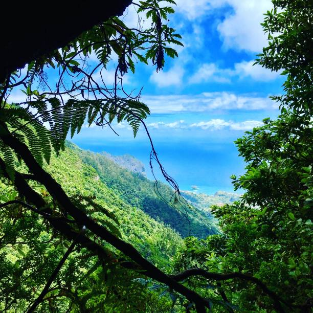 Laurosilva forest in madeira stock photo