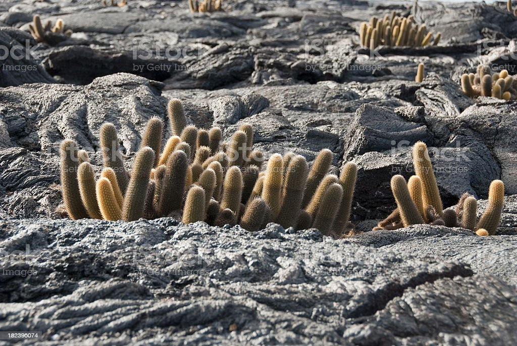 Lava and Lave Cactus stock photo