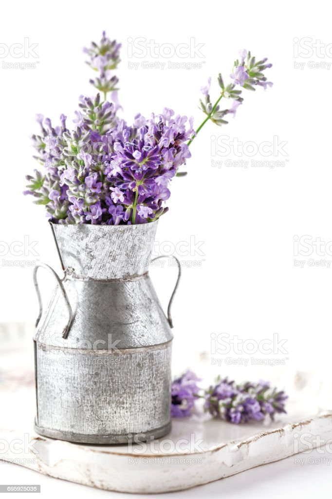 Lavander flower bouquet in a tin can vase. Isolated on white background. stock photo