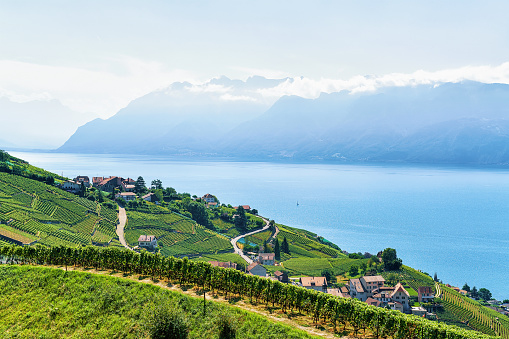 Lavaux Vineyard Terrace Lake Geneva and Swiss mountains Switzerland