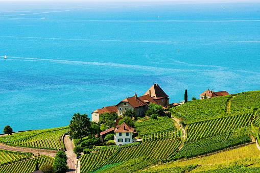 Lavaux Vineyard Terraces hiking trail Lake Geneva of Switzerland