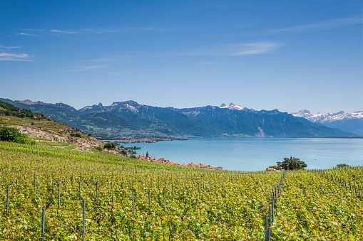 Lavaux vineyards near Montreux Switzerland and view at Lake Geneva and Swiss Alps