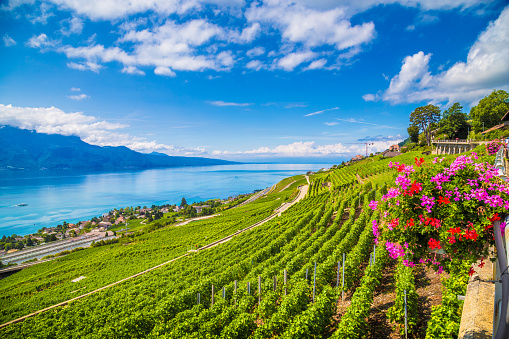 Lavaux wine region at Lake Geneva, Switzerland