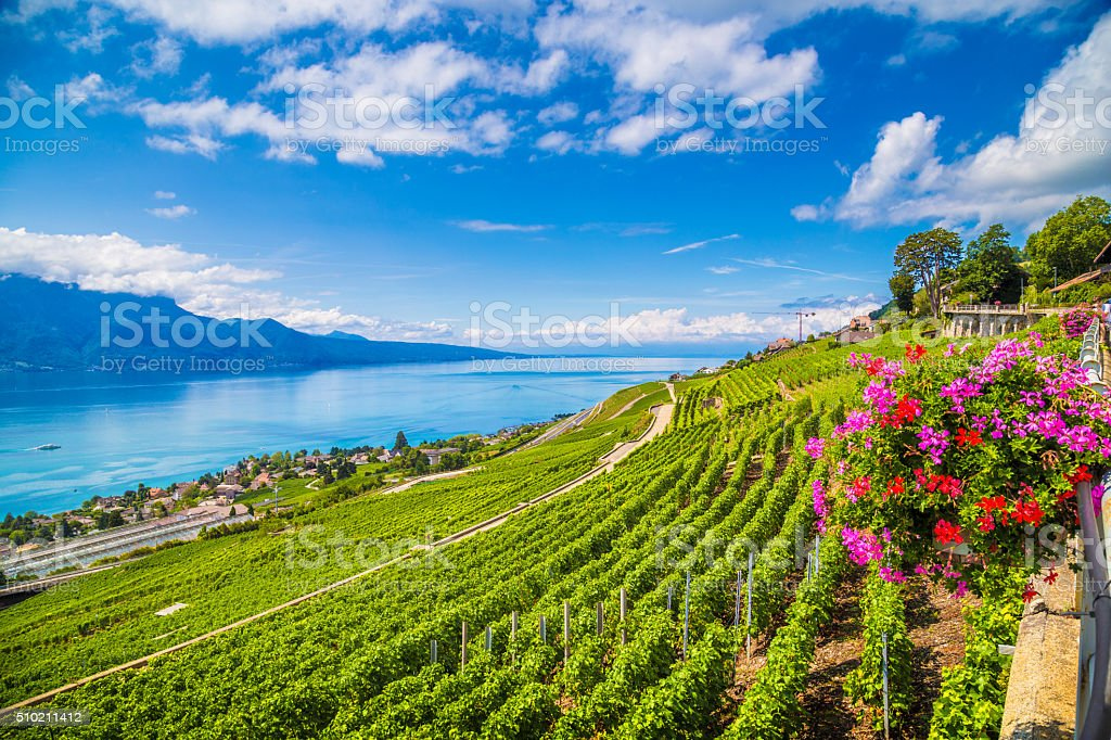 Lavaux wine region at Lake Geneva, Switzerland stock photo