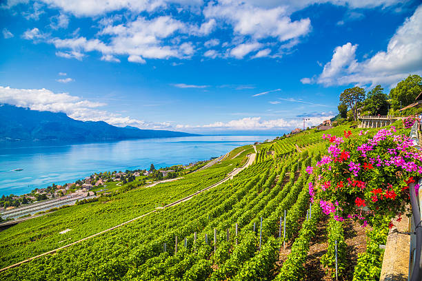Lavaux wine region at Lake Geneva, Switzerland Beautiful scenery with vineyard terraces in famous Lavaux wine region, UNESCO World Heritage Site since 2007, overlooking the northern shores of Lake Geneva, Canton of Vaud, Switzerland. provence alpes cote d'azur stock pictures, royalty-free photos & images
