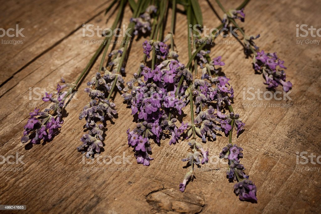 Lavendelernte stock photo