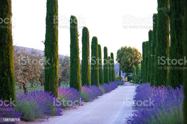Lavender Alley Stock Photo - Download Image Now