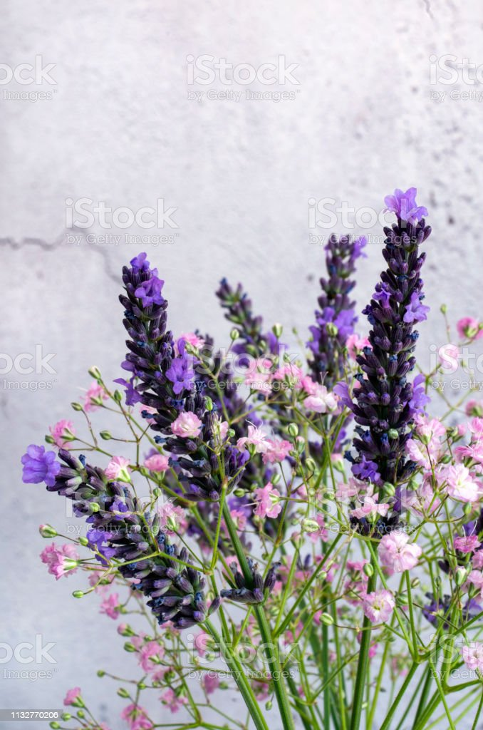 Lavender and Gypsophila stock photo