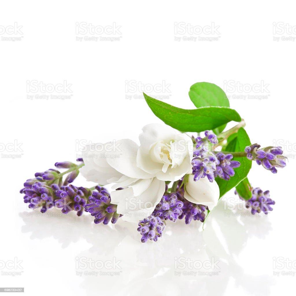 Lavender and jasmine flowers foto royalty-free