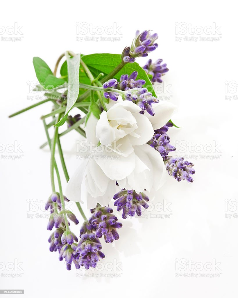 Lavender And Jasmine Flowers Stock Photo More Pictures Of
