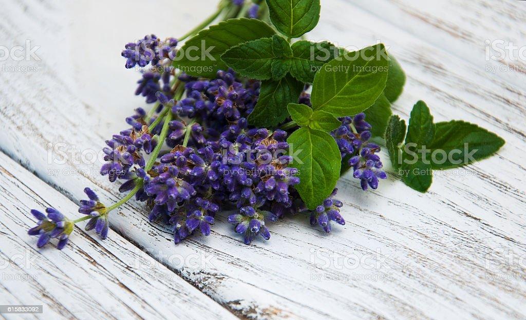 Lavender and mint stock photo