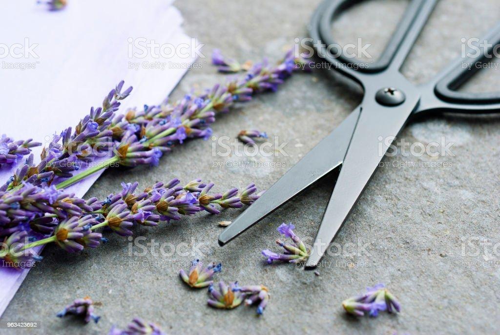 Lavande et ciseaux - Photo de Arbre en fleurs libre de droits