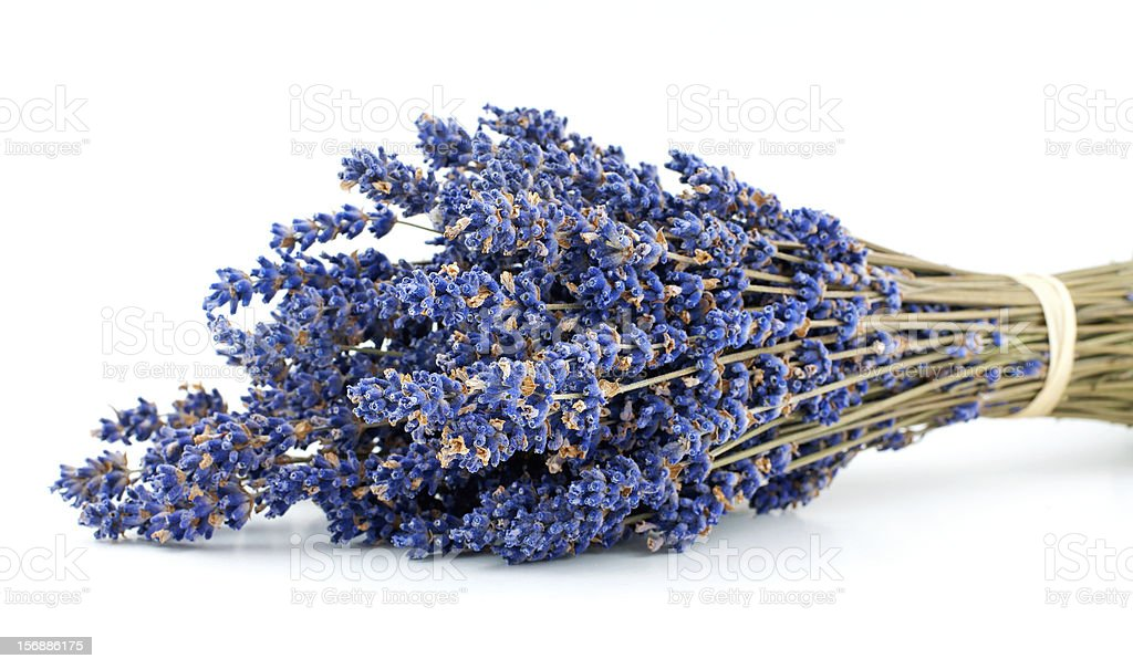 Lavender bouquet isolated on white background royalty-free stock photo