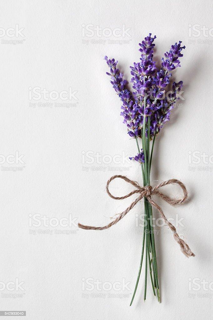 Lavender bouquet stock photo