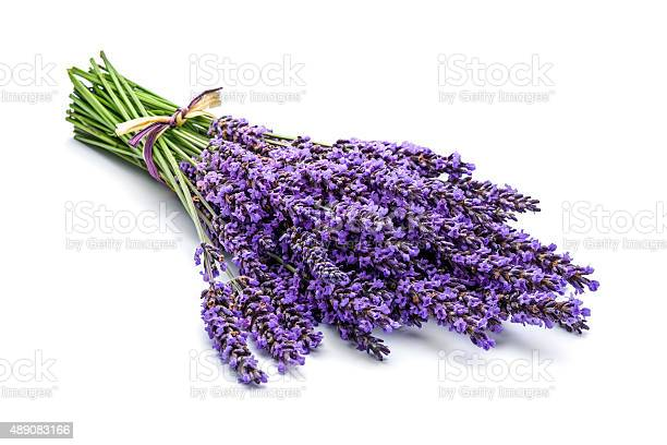 Lavender bunch picture id489083166?b=1&k=6&m=489083166&s=612x612&h=apoeakyjh4n6fq64zvuk29mrlwnczlhzawisbz459r4=