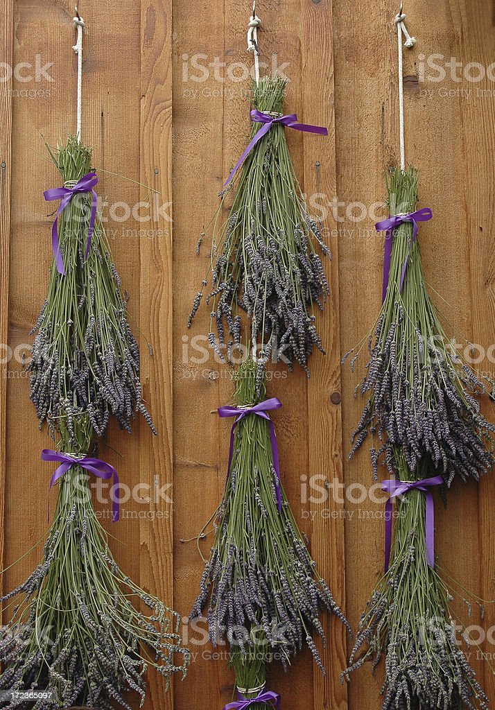 Lavender Bunches Drying royalty-free stock photo