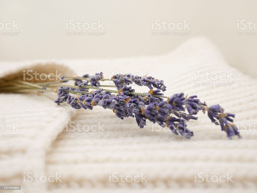 Lavender close-up royalty-free stock photo