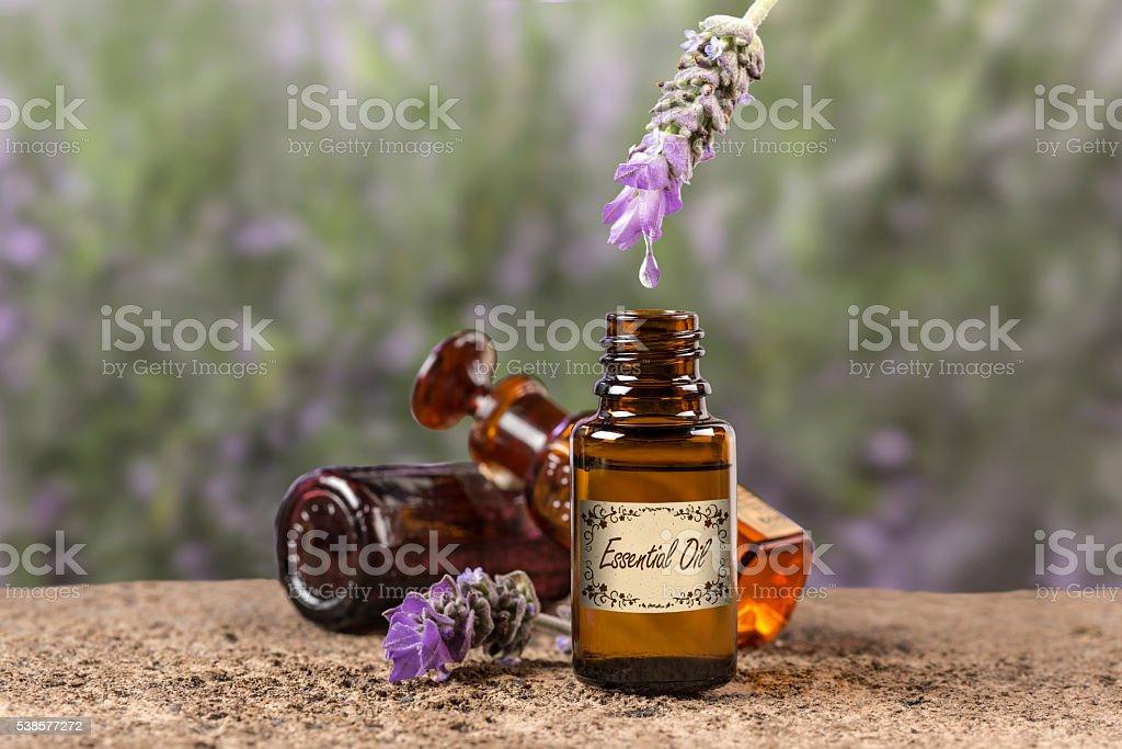 Lavender essential oil drop stock photo