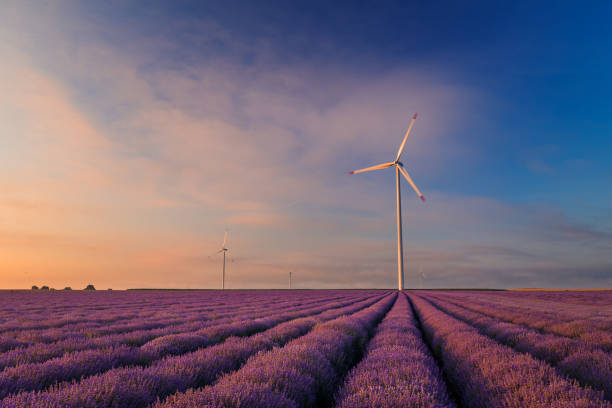 Lavender field against a cloudy sky with eolian wind turbines at sunrise or sunset stock photo