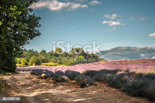 917116520 istock photo Lavender field against the blue sky in Provence 854099146