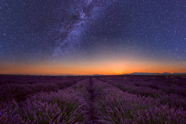 Lavendel-Feld in der Nacht in der Provence, tolle Landschaft, Frankreich – Foto