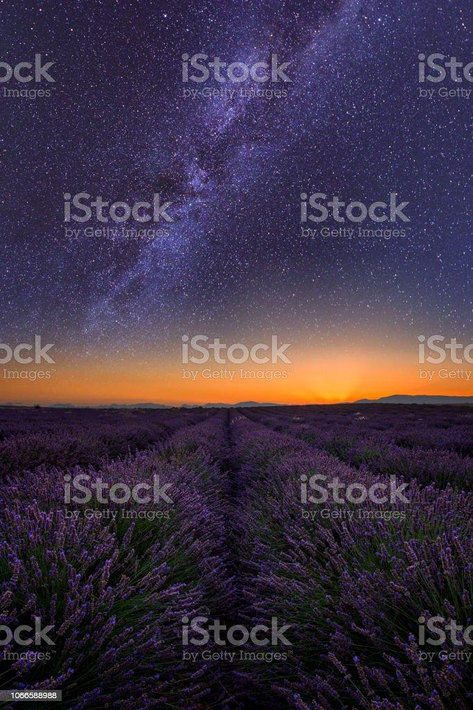 Lavendel-Feld in der Nacht in der Provence, tolle Landschaft, Frankreich, vertikales Bild – Foto