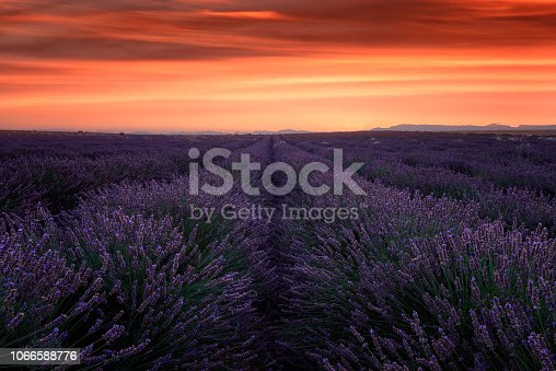 Lavender field at dusk in Provence, beautiful nature landscape with fiery sky, France