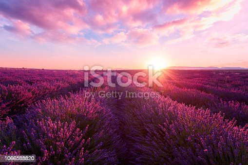 istock Lavender field at sunset, Provence, amazing landscape with fiery sky, France 1066588820