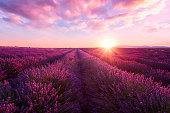 夕暮れ、プロヴァンス、フランスの燃えるような空の風景を素晴らしいラベンダー畑