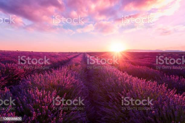Lavender field at sunset provence amazing landscape with fiery sky picture id1066588820?b=1&k=6&m=1066588820&s=612x612&h=wsfsaevwxgrisjfen3puwjlfozskqdz5s iwg1me3yu=