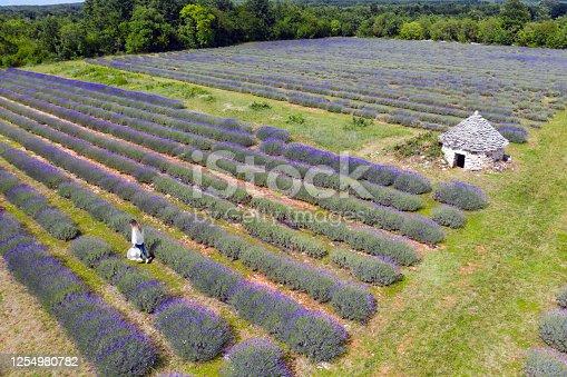 istock Lavender field 1254980782