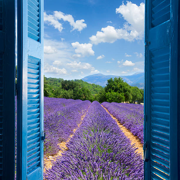 Lavender field Lavender field with summer blue sky through wooden shutters, France provence alpes cote d'azur stock pictures, royalty-free photos & images