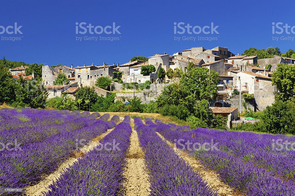 Lavender field with a small town in Provence stock photo