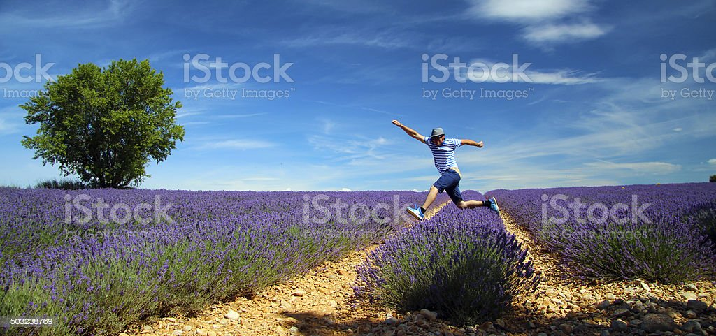 Lavender fields in Provence (south France) stock photo