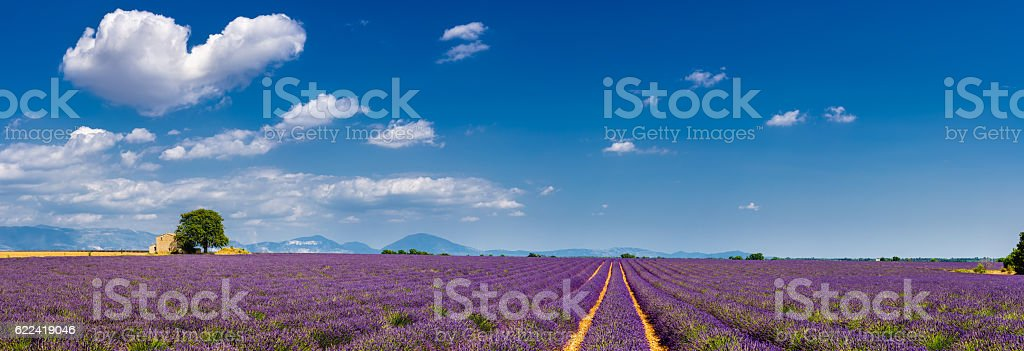 Lavender fields in the heart of Valensole, Southern France - Photo