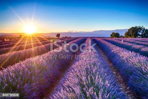 istock lavender fields 848795606