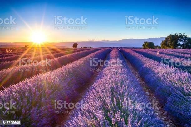 Lavender fields picture id848795606?b=1&k=6&m=848795606&s=612x612&h=zepeyzhwye1suhxak0fmsp4loximazovtiauiteusg0=