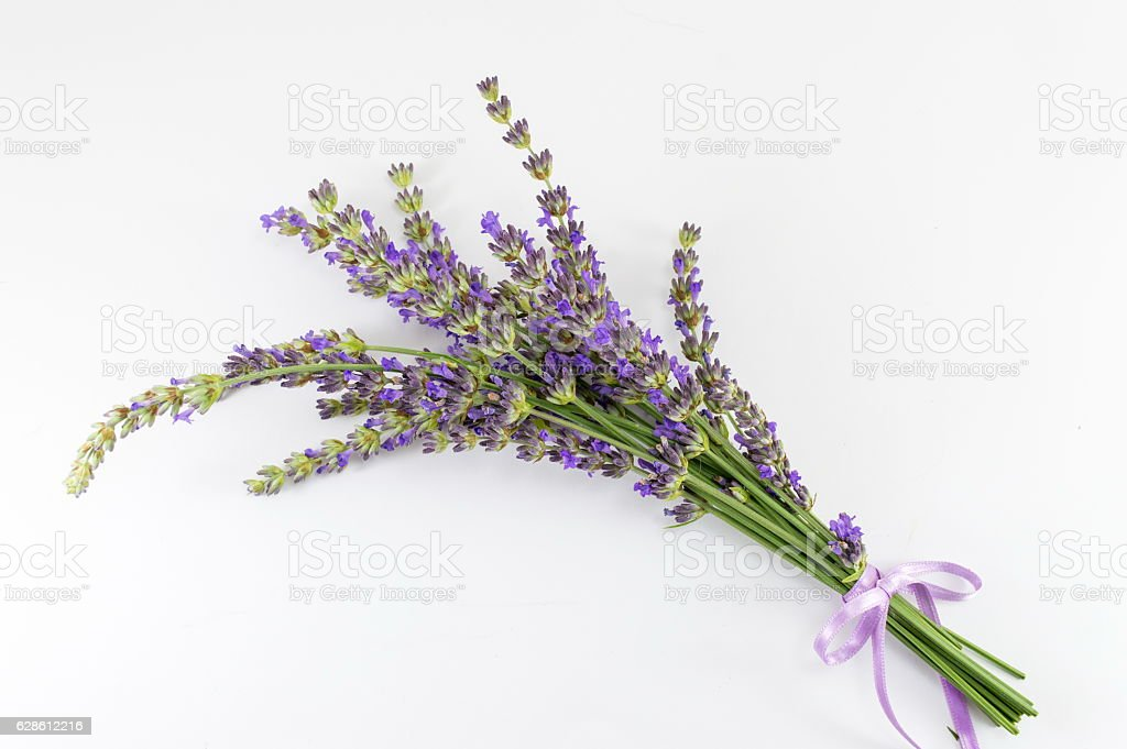 Lavender flower branches bouquet on white stock photo