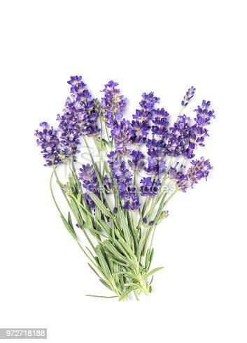 Lavender flower bunch isolated on white background. Fresh provencal herbs