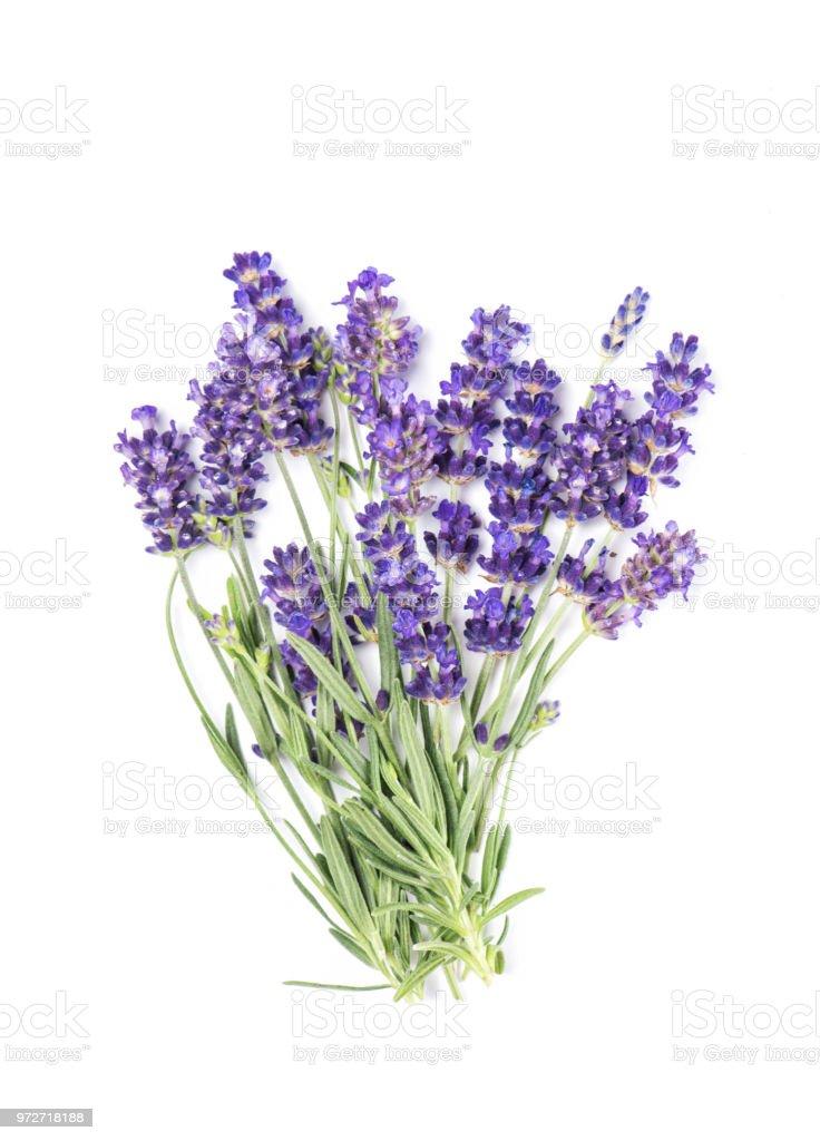 Lavendel Blume isoliert Haufen weißer Hintergrund – Foto