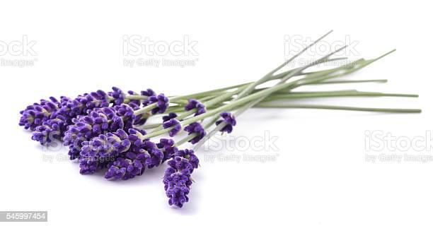 Lavender flowers bunch picture id545997454?b=1&k=6&m=545997454&s=612x612&h=rkbyx2dokr2fht25lzqz8wkq1jjtxueebepndfhoa4g=