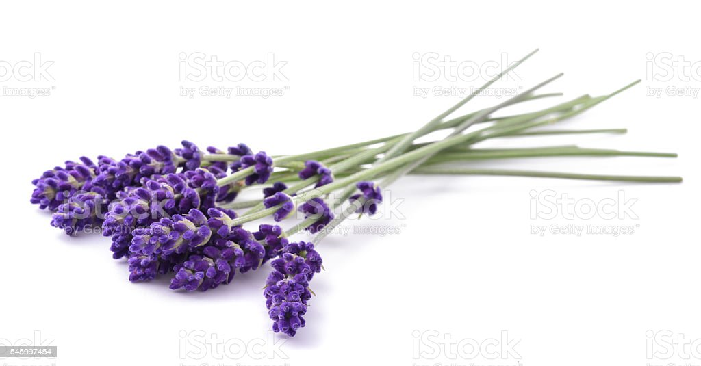 Lavender flowers bunch stock photo
