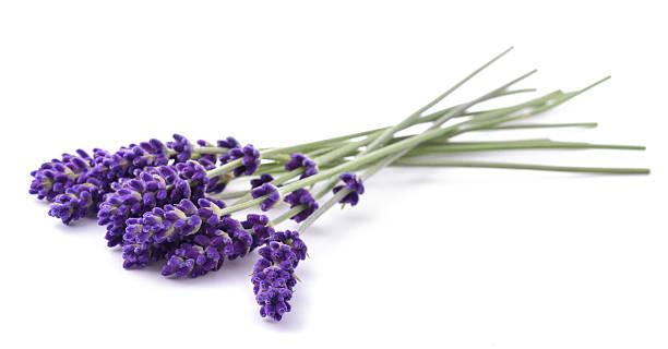 lavender flowers bunch - lavendel stockfoto's en -beelden