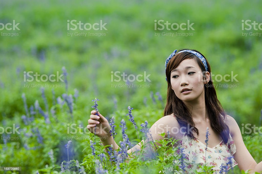 Lavender flowers in the beautiful royalty-free stock photo