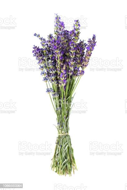 Lavender flowers isolated on white background picture id1066550064?b=1&k=6&m=1066550064&s=612x612&h=trzvkc4gax curg45mw cqxgs0rk7oxmdy9axyv6qya=
