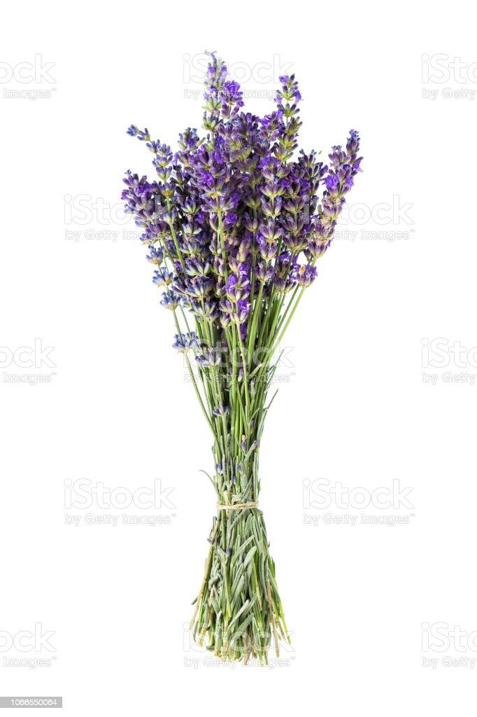 Lavendel Blumen isoliert auf weißem Hintergrund – Foto