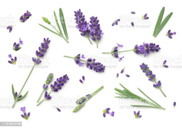 Lavender flowers isolated on white background picture id1157915736?b=1&k=6&m=1157915736&s=612x612&h=dpponfmmufdku85 9u7arexrfjcpvqnpbd8ctxavtlg=
