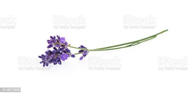 Lavender flowers isolated on white picture id514612309?b=1&k=6&m=514612309&s=612x612&h=m2hvqvcmczjietkec4w3k7zwsmj8lpm5w6zodkedres=